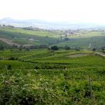 Brandolini Pietro - Oltrepò Pavese panorama